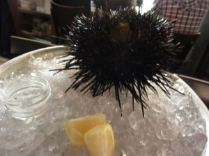 The Hungry Cat - Sea Urchin